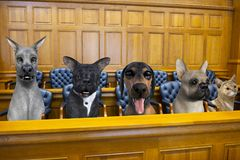 Chien drôle Cat Jury Courtroom Trial photographie stock libre de droits