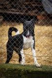 Chien drôle dans une cage Refuge pour animaux Le chien attend son propriétaire Un chien est un ami du ` s d'homme Images stock