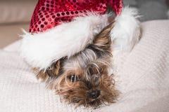 Chien drôle pendant une nouvelle année Un petit chien dans un chapeau de nouvelle année se trouve sur un oreiller blanc image libre de droits
