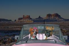 Chien drôle de voyage, chiens, vacances Images libres de droits