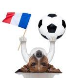 Chien du football du football avec la boule Photos stock