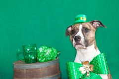 Chien du jour de St Patrick Photographie stock libre de droits