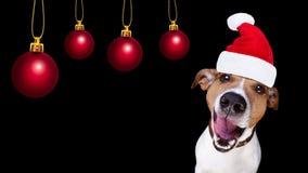 Chien du père noël de Noël d'isolement sur le noir Photo stock
