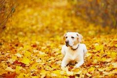 Chien en automne Photos stock