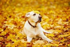 Chien en automne Image libre de droits