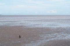 Chien en bord de la mer Photographie stock libre de droits