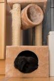 Chien en caverne câline d'un arbre de chat Images stock