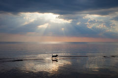 Chien en mer. Image libre de droits