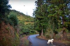 Chien en montagnes Photographie stock libre de droits