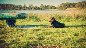 Chien en parc Photo stock