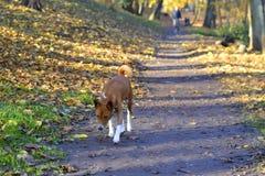 Chien en parc pour une promenade image libre de droits