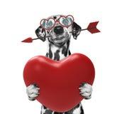 Chien en verres tenant un coeur Photographie stock libre de droits