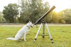 Chien enroué blanc avec le télescope se reposant sur l'herbe image stock