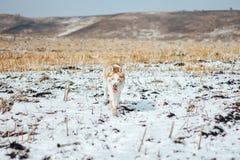 Chien enroué se tenant sur la terre gelée et neigeuse regardant la visionneuse photos libres de droits