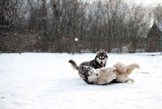 Chien enroué sur la neige Image stock
