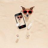 Chien enterré dans le selfie de sable image libre de droits