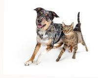 Chien enthousiaste et Cat Walking Forward Together images libres de droits