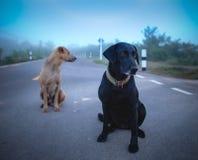 Chien et ami de Labrador Photos stock