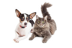 Chien et Cat Laying Together Looking Forward Images libres de droits