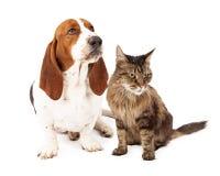 Chien et Cat Scowling fâchés Photos libres de droits