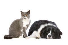 Chien et chat images stock