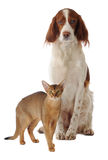 Chien et chat Photo stock