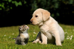 Chien et chat Photo libre de droits