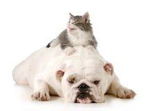 Chien et chat Image stock