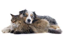 Chien et chat Images libres de droits