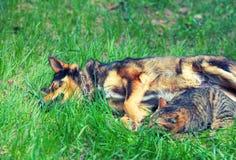 Chien et chat Photo libre de droits