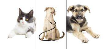 Chien et chat Photographie stock libre de droits