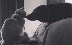 Chien et chat comme meilleurs amis photo libre de droits