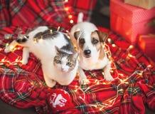 Chien et chat dans la décoration de Noël image libre de droits