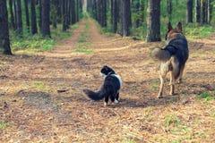 Chien et chat dans la forêt Photo stock