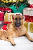 Chien et chat dans la nuit de Noël Photo libre de droits