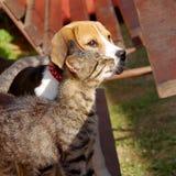 Chien et chat de briquet Image stock