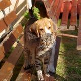 Chien et chat de briquet Images stock