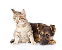 Chien et chat de croisement ensemble D'isolement sur le fond blanc Photographie stock