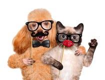 Chien et chat de hippie Photographie stock