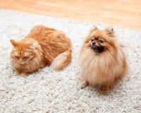 Chien et chat de Pomeranian se reposant sur le tapis Photographie stock libre de droits