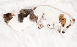 Chien et chat de sommeil au lit Photographie stock