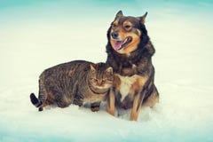 Chien et chat ensemble dans la neige Images stock