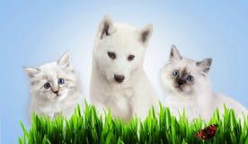 Chien et chat ensemble sur l'herbe, concept de ressort Photo stock