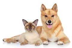 Chien et chat heureux ensemble images stock
