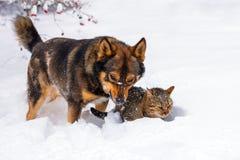 Chien et chat jouant dans la neige Images stock
