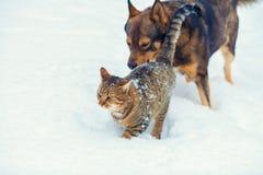 Chien et chat jouant ensemble dans la neige Image stock