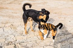 Chien et chat jouant ensemble extérieur Photos stock