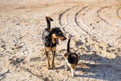 Chien et chat jouant ensemble extérieur Photographie stock libre de droits