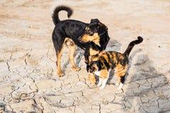 Chien et chat jouant ensemble extérieur Photo stock