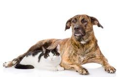 Chien et chat mélangés de race ensemble D'isolement sur le fond blanc Photographie stock